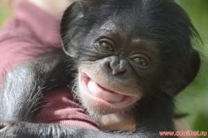 alt=Прикольные и смешные фото обезьян