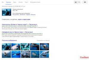 Поиск по картинке, изображению, фото в Гугл результат поиска
