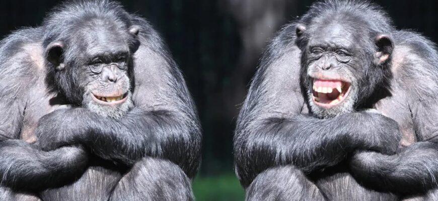 Прикольные и смешные фото обезьян