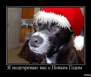 Я подозреваю вас с Новым годом
