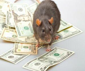 2020 Новый год Крысы