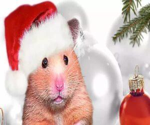 Картинки 2020 Новый год Крысы