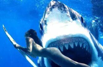Shark Promo