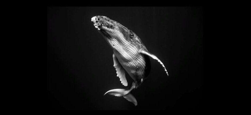 Биткоин-кит продал 3000 BTC