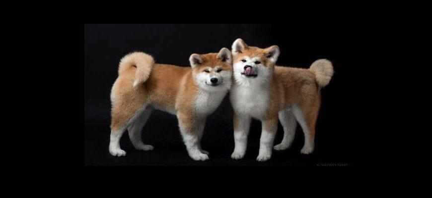Dogecoin и SHIBA INU риск сильной коррекции